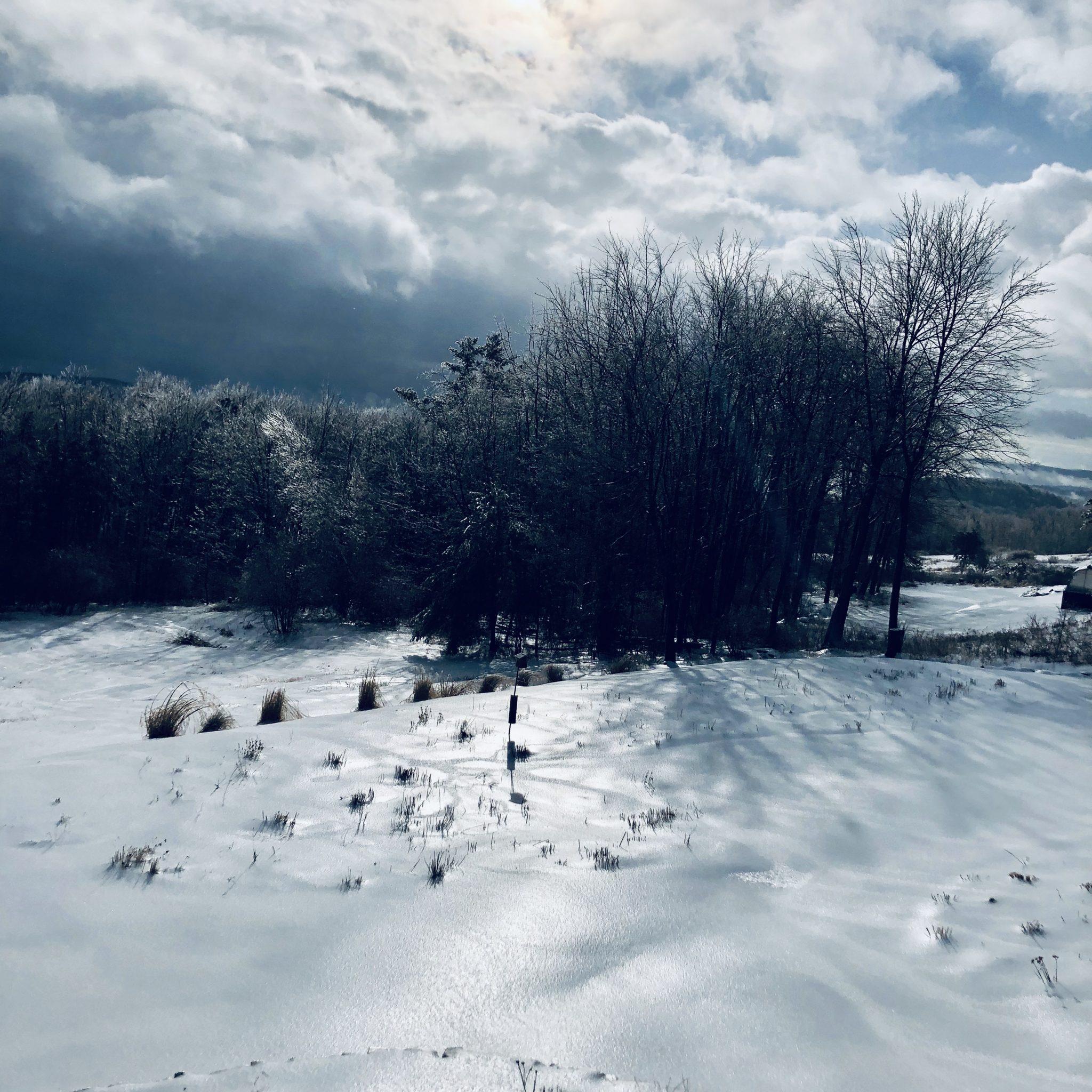 Tree ice storm westledge winter