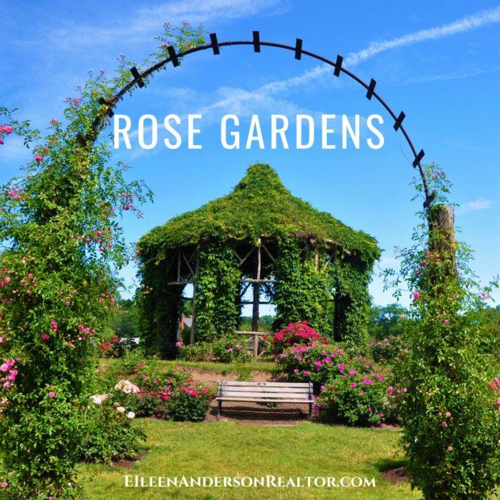 rose-garden-elizabeth-park
