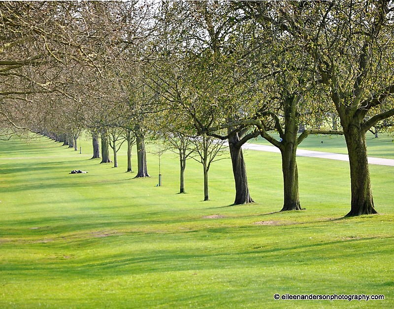 Windsor Castle Trees, England